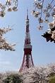 【世界之最】世界最高的自立式鐵塔:東京鐵塔 | 大紀元