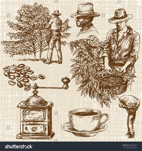 Any other artwork or logos are property and trademarks of their respective owners. Coffee Farmer Picking Red Coffee Beans Stock Vector (Royalty Free) 428689027 - Shutterstock