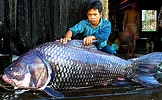 One Man's Quest to Save the Most Colossal Fishes on Earth ...