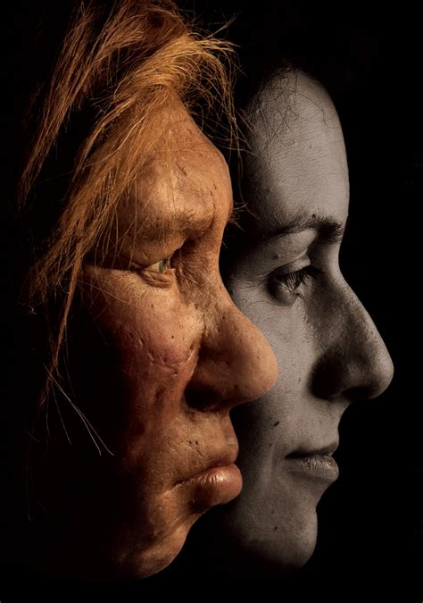 neanderthal genes hold surprises for modern humans
