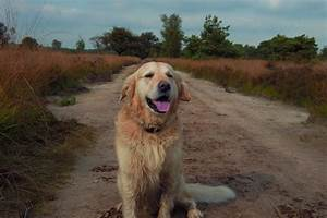 dog walker archives pet sitting in villa rica With top dog sitters