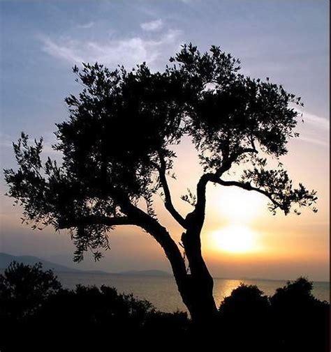 entre deux rives l arbre de vie