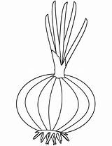Onion Coloring Pages Printable Colouring Drawing Onions Template Categories Adults sketch template