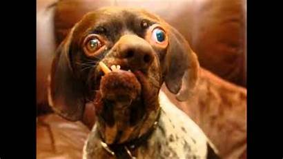 Ugly Dog Dogs Wallpapers Cats Funny Backgrounds