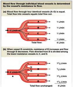 Blood Flow and Pressure Resistance