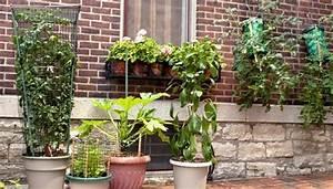 Hortensien überwintern Im Keller : balkonpflanzen richtig berwintern im haus ~ Frokenaadalensverden.com Haus und Dekorationen