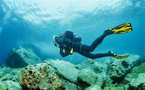 compelling reasons  dive  curacao mosaic