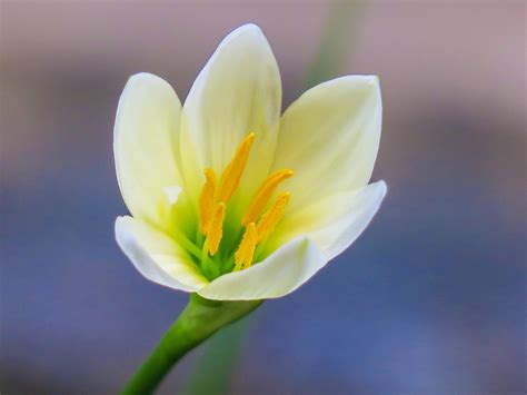 bagian bagian bunga   simbol cinta ifabrix