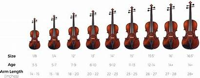 Viola Violin Chart Cost Much Does Cello