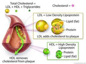 Medmovie.com - Cholesterol – LDL and HDL Cholesterol