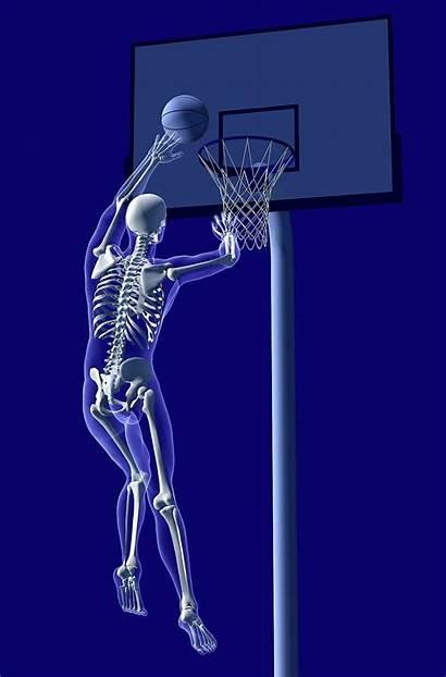 Sports Anatomy Basketball Injury Therapy Rehabilitation Smith