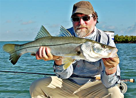 snook florida fishing keys fly islamorada backcountry guide everglades found flies generally mouthed gamefish explosive phenomenal bucket another national park