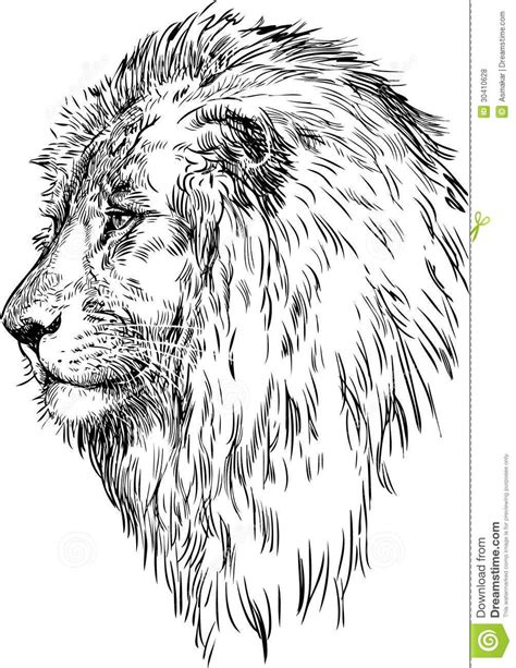 Lion profile drawing | danasrho.top | Coloring Pages