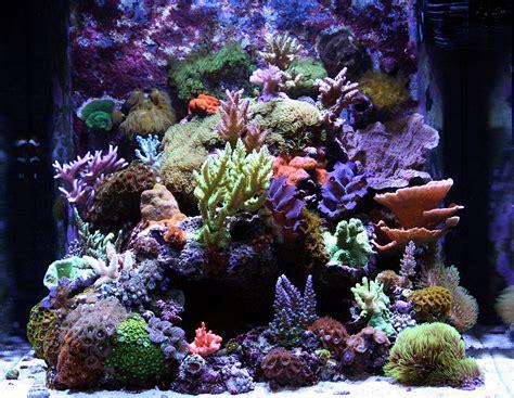 Podrod  2009 Featured Nano Reef Aquariums Nanoreefcom
