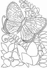 Coloring Print Butterfly Adults Pages sketch template