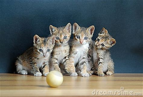 cute cats royalty  stock photography image