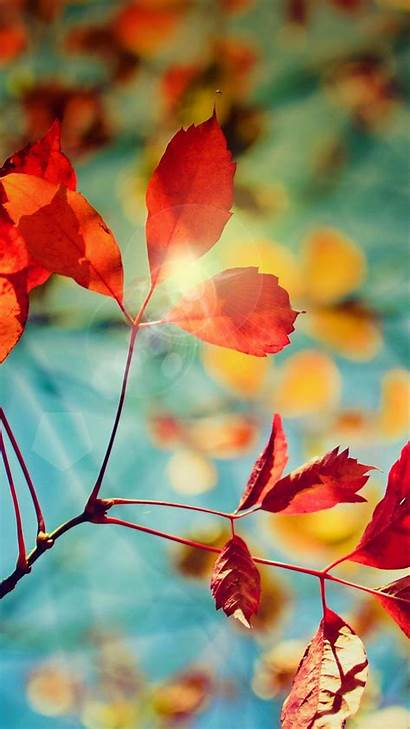 Samsung Mobile Fall S5 Autumn Wallpapers Galaxy