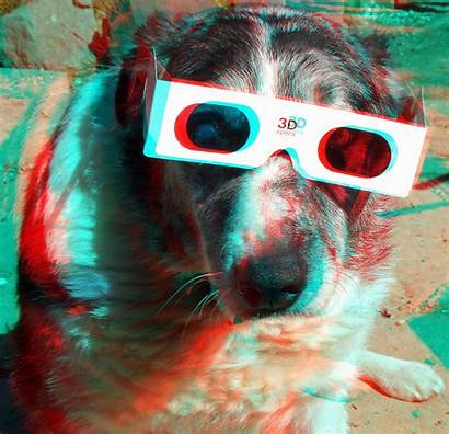 3d Anaglyph Dog Glasses Cyan Stereoscopic Funny