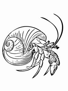 Common Hermit Crab or Soldier Crab coloring page ...