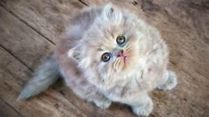 Balkonschutz Für Katzen : interview macht ein chip obligatorium f r katzen sinn kassensturz espresso srf ~ Eleganceandgraceweddings.com Haus und Dekorationen