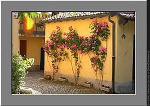 Wann Schneidet Man Rosen Zurück : rosen zur ckschneiden wann und wie weit gr ser im k bel berwintern ~ Orissabook.com Haus und Dekorationen