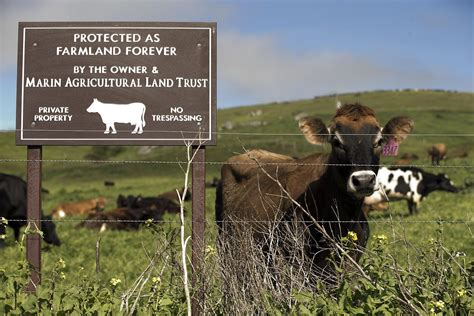 reyes point cattle lands grazing incompatible wildlife sfgate keystone species