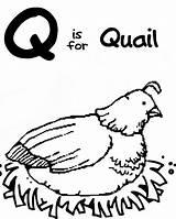 Coloring Quail Letter Preschool Sheets sketch template