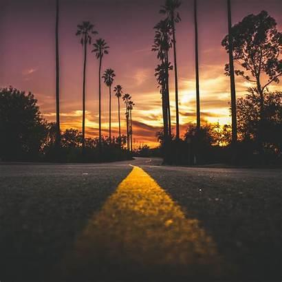Road Trees Marking Palms Sky Retina Parallax