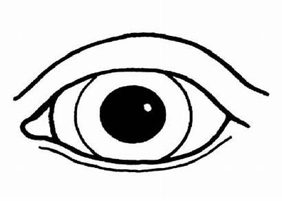 Coloring Eye Eyes Pages Human Printable Parts