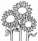 Sunflower Coloring Clipart Pages Printable Library sketch template