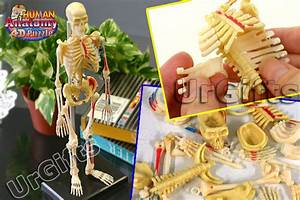 4d Puzzle Human Anatomy Series 3d Model 46pcs Skeleton