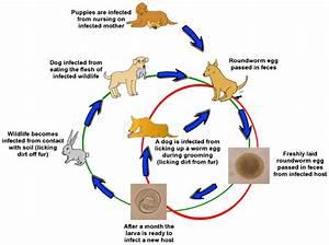 Biddeford Animal Hospital Veterinary York County Maine 556 ...