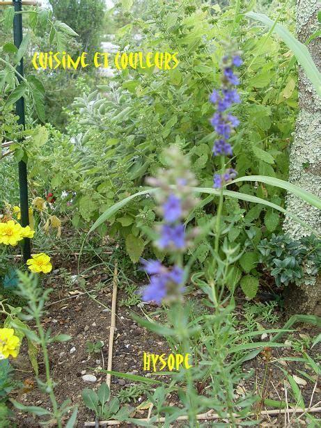 cuisiner avec des fleurs avc 17 mini aubergines au chèvre fleuri cuisiner