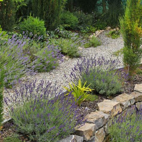 Pflanzen Für Mediterranen Garten mediterraner garten planen anlegen und tipps mein