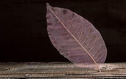 Transparent Leaf Wallpapers Translucent Pc Desktop Abstract