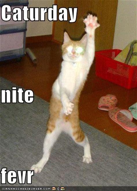 Dancing Cat Meme - funny dancing cats d facemash