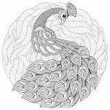 Peacock Zentangle Coloring Adult Antistress Drawn Hand Vector Flowersfor Totem Stress Anti Exotic Detailed sketch template