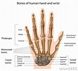 What is the Proximal Interphalangeal Joint? (with pictures)