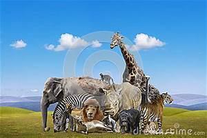 Groupe D'animaux Sauvages Photo libre de droits - Image ...
