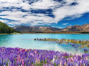 Lake Tekapo Town In The South Island New Zealand Spring Flowers Lake Mountains Sky White Clouds