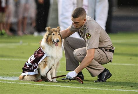 texas  cadet rewarded  protecting mascot reveille