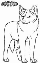 Coyote Coloring Pages Printable Drawing Animal Easy Coyotes Desert Howling Jackal Cool2bkids Animals Getcoloringpages Getdrawings Getcolorings sketch template