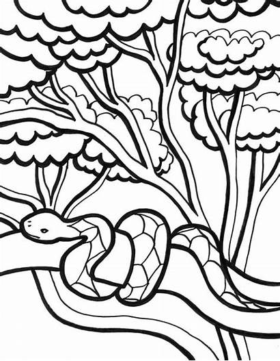 Jungle Coloring Pages Snake