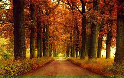 Autumn Wallpapers Park Alley Background Backgrounds Leaves