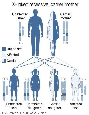 blood diseases  disorders boundless anatomy