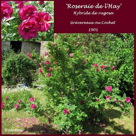 bureau de poste l hay les roses ancienne 39 roseraie de l 39 hay 39 photo de roses