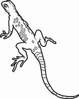 Lizard Coloring Gecko Lizards Leopard Printable Realistic Geckos Colouring Sheets Snakes Lineart Frogs Getcolorings Adult sketch template