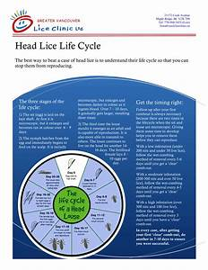 Understanding the Life Cycle : Greater Vancouver Lice Clinic