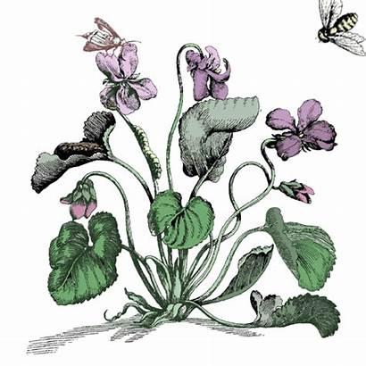 Welcome Herbs Garden Honey Enter