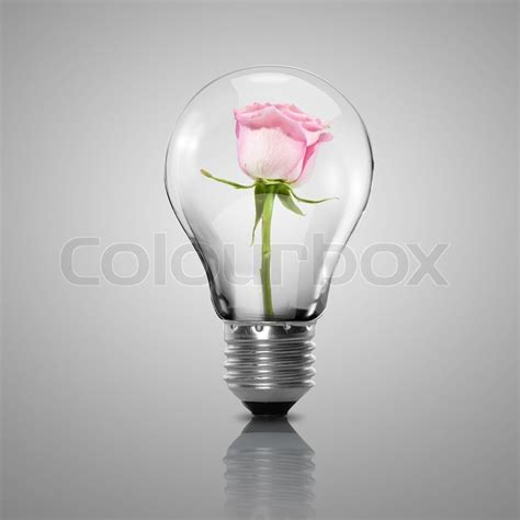 flowers in light bulbs electric light bulb and flower inside it as symbol of